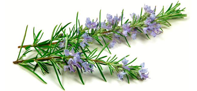 Nutexa rosemary extract rich with polyphenols and antioxidants
