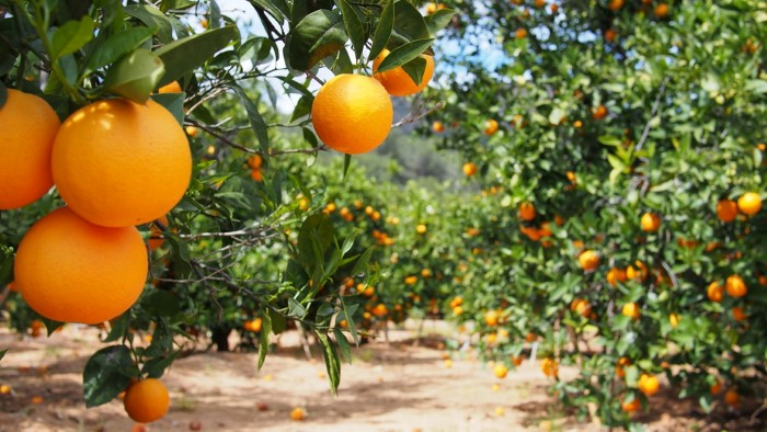 Citrus extracts are rich with vitamins