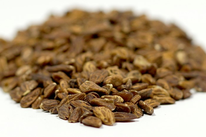 Olive seed contains hydroxytyrosol