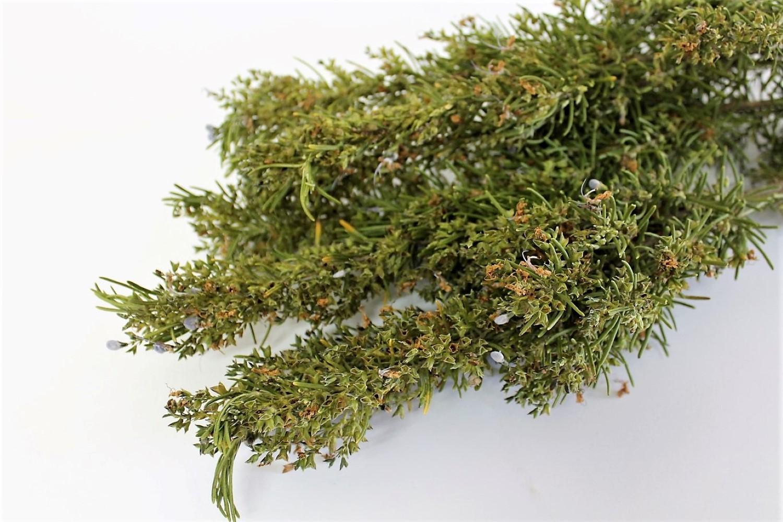Extracto de Romero, uno de los mejores antioxidantes alimentarios.