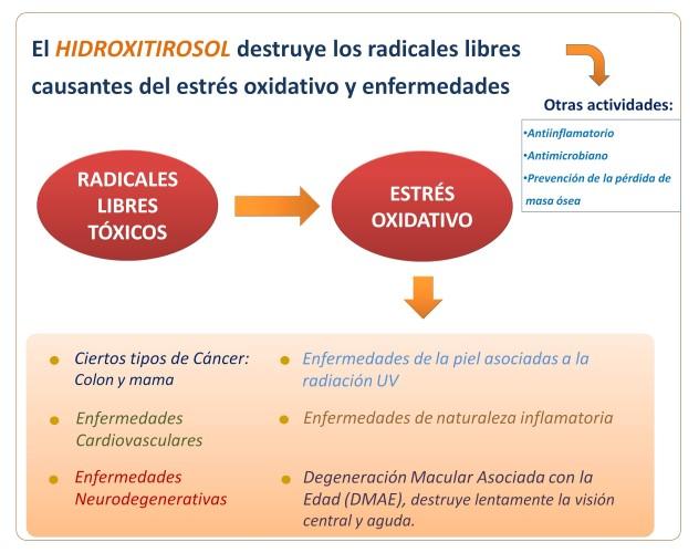 Hydroxytyrosol functions