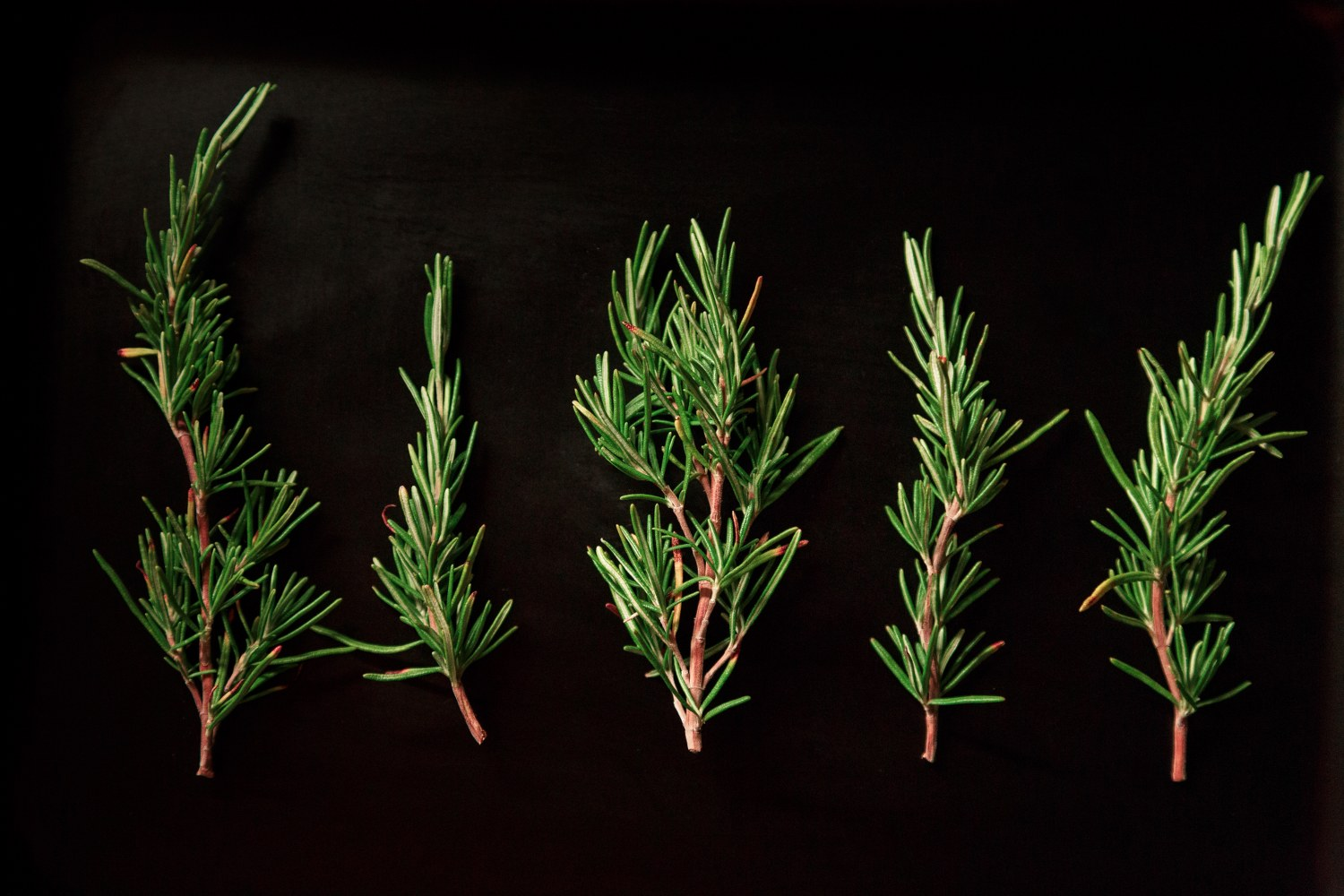 Functions of Rosemary Extract in food and its labeling.