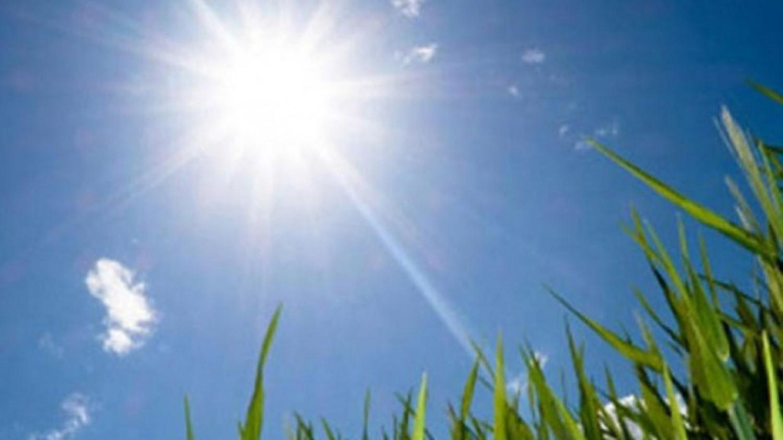 El olivo, clave en la revolución de los protectores solares.