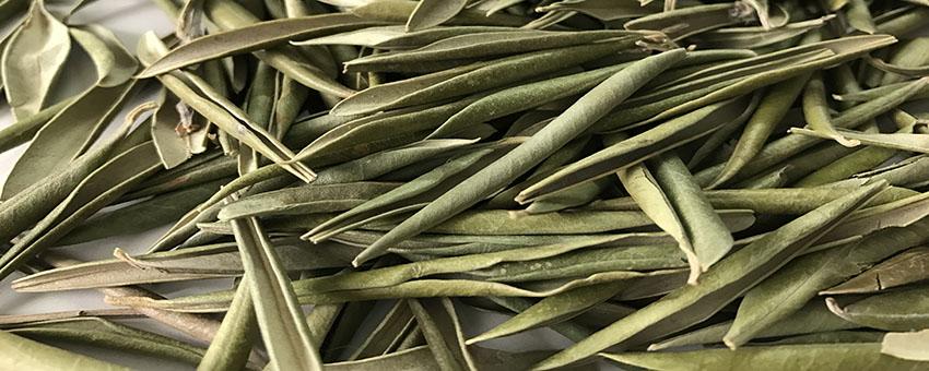 Aplicaciones y usos del extracto de hoja de olivo