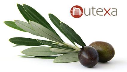 Los extractos de hoja de olivo con una concentración elevada de Oleuropeína han mostrado ser efectivos en cuadros de hipertensión arterial leve o moderada.